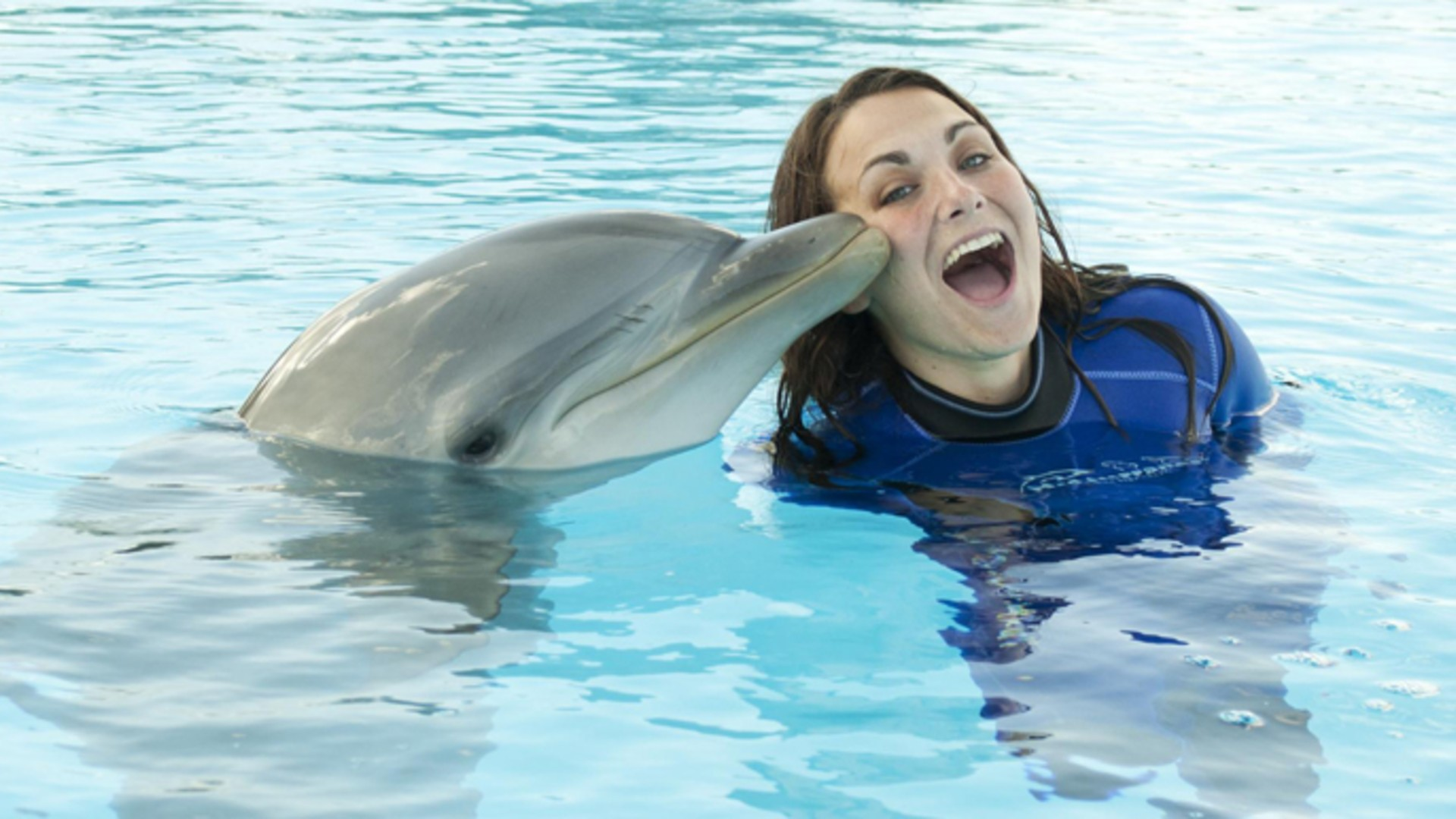 Купание с дельфинами на Мальте